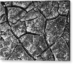 Dried Mud 2 Acrylic Print by Mike McGlothlen