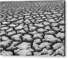 Dried Mud 9 Acrylic Print by Mike McGlothlen
