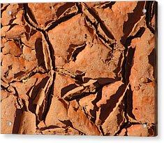 Dried Mud C Acrylic Print by Mike McGlothlen