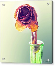 Dried Rose Acrylic Print by Brian Wallace