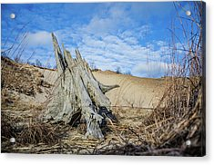 Dried Stump At Warren Dunes Acrylic Print