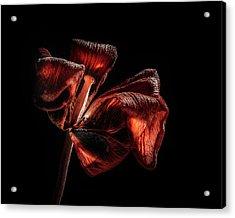 Dried Tulip Blossom Acrylic Print