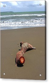 Drift Wood Acrylic Print by Jez C Self
