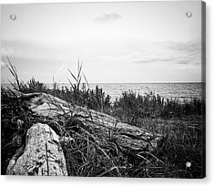 Acrylic Print featuring the photograph Drift Wood by Karen Stahlros