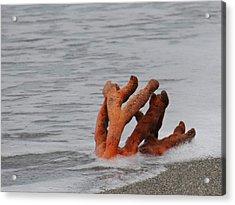 Drifting Coral Acrylic Print