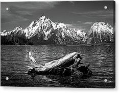 driftwood and Mt. Moran Acrylic Print