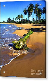Driftwood And Palm Trees Acrylic Print by Thomas R Fletcher