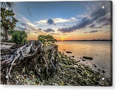 Acrylic Print featuring the photograph Driftwood At The Edge by Debra and Dave Vanderlaan