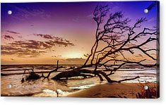 Driftwood Beach 2 Acrylic Print