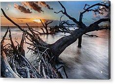 Driftwood Beach 6 Acrylic Print