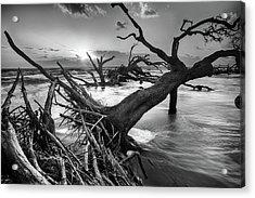 Driftwood Beach 8 Acrylic Print