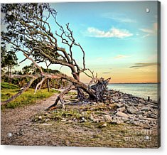 Acrylic Print featuring the photograph Driftwood Beach Morning 2 by Kerri Farley