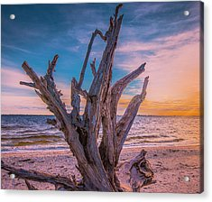 Acrylic Print featuring the photograph Driftwood Beach by Steven Ainsworth