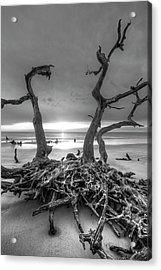 Driftwood Black And White Acrylic Print by Debra and Dave Vanderlaan