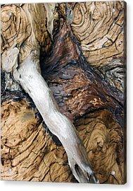 Driftwood Canyon Vi Acrylic Print by D Kadah Tanaka