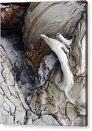 Driftwood Canyon Vii Acrylic Print by D Kadah Tanaka