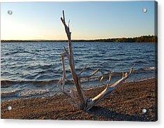 Driftwood Acrylic Print by Donald Mac Fadyen