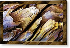 Driftwood Edges Acrylic Print by ABeautifulSky Photography