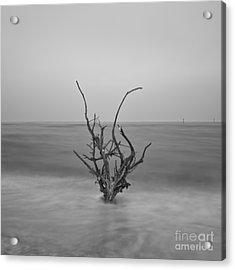 Driftwood Infrared 64 Acrylic Print by Rolf Bertram