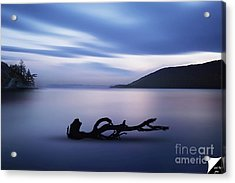 Acrylic Print featuring the photograph Driftwood by Jim  Hatch