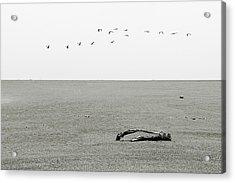 Driftwood Log And Birds - A Gray Day On The Beach Acrylic Print