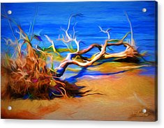 Driftwood Acrylic Print by Ludwig Keck
