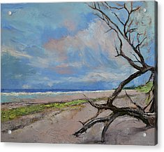 Driftwood Acrylic Print by Michael Creese