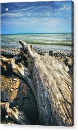 Driftwood On Beach - Grant Park - Lake Michigan Shoreline Acrylic Print by Jennifer Rondinelli Reilly - Fine Art Photography