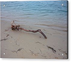 Driftwood On Ocean Beach Acrylic Print by Adrianne Wood