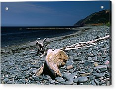 Driftwood On Rocky Beach Acrylic Print by Sally Weigand