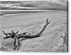 Driftwood On The Beach In Black And White Acrylic Print by Paul Ward