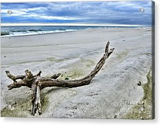 Driftwood On The Beach Acrylic Print by Paul Ward