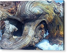 Driftwood Swirls Acrylic Print by Todd Breitling