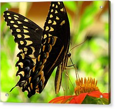 Drinking From A Straw Acrylic Print by Dottie Dees