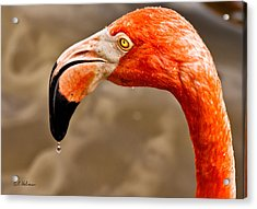 Dripping Flamingo Acrylic Print by Christopher Holmes