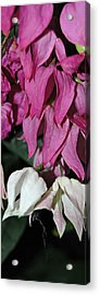 Dripping Pink Acrylic Print by Jean Booth