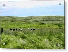 Driveby Shooting No.17 Cows Acrylic Print by Christine Segalas