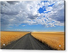 Driving Through The Wheat Fields Acrylic Print by Lynn Hopwood