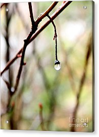 Drop Of Rain Acrylic Print