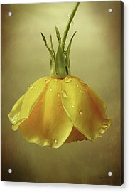 Drop Rose Acrylic Print
