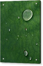 Droplet Of Life Acrylic Print