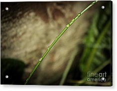 Droplets 2 Acrylic Print by Cendrine Marrouat