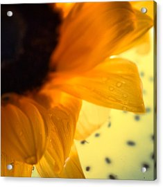 Acrylic Print featuring the photograph Droplets by Bobby Villapando