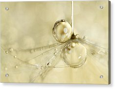 Droplets In Gold Acrylic Print