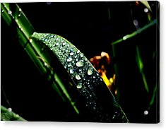 Droplets Of Water Acrylic Print by Robert Scauzillo
