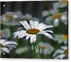 Droplets On Daisies Acrylic Print by Emily Michaud