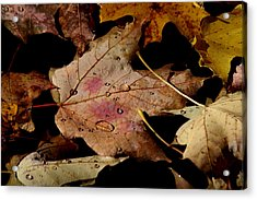 Acrylic Print featuring the photograph Droplets On Fallen Leaves by Doris Potter