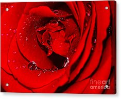 Droplets On Red Rose By Kaye Menner Acrylic Print by Kaye Menner
