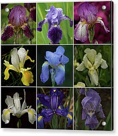 Drops Of Iris -- A Collage Acrylic Print by Richard Cummings