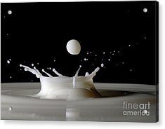 Drops Of Milk Splashing Into The Air Acrylic Print by Sami Sarkis